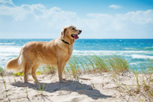 Kihei Maui condos that allow pets
