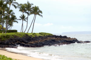 Maui Real Estate Listing Status